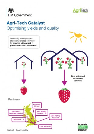 Optimising yields and quality - growing strawberries in substrate